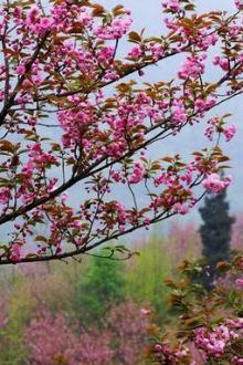 追逐春的脚步,踏青摄影赏花洗肺之旅