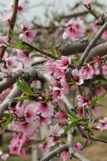 春游丹东,俩日游。