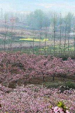 枣阳赏桃花、白水寺一日游