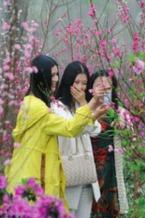 """4月14日""""桃花情缘""""爱在青山,相亲交友赏花会"""