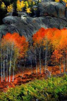 10.17【喇叭沟门】聆听白桦林声音,看最美秋景