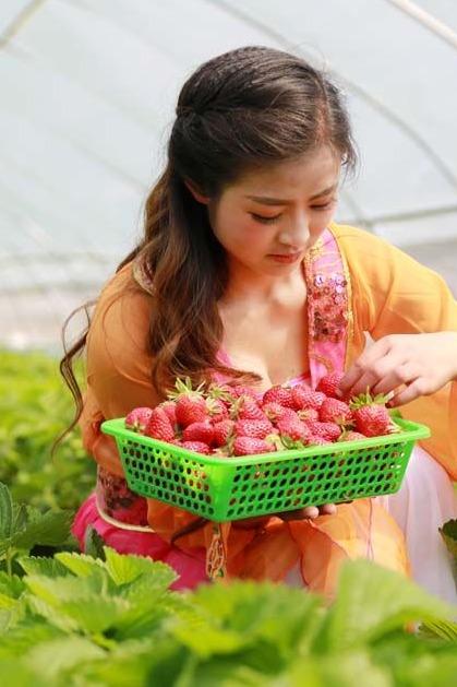 周日摘草莓,踏青相约一起