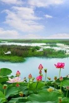 洪泽湖赏荷花、观芦苇、行景观大道、品鲁肃家宴