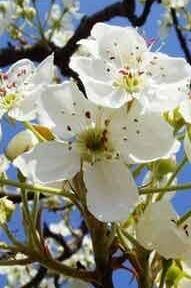 5月1日—2日两天闾山赏杏花 拍照 登山