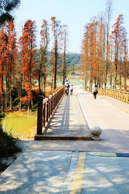 12月4日江门圭峰山赏红叶烧烤,新会柑采摘一天游