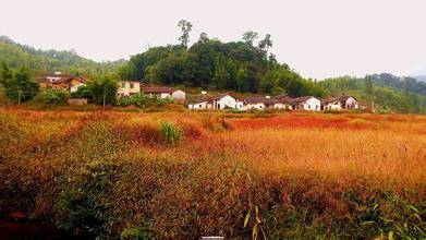 【每周六、日发团】影古线溪头村、阿婆六环线竹海徒步