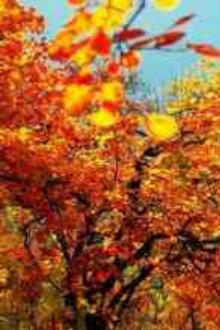 南京栖霞山观红叶+清凉山银杏谷赏秋一日游