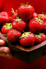 1月16号长丰摘草莓活动