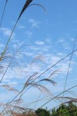 """12月13日周末""""牛木线""""徒步,感受冬日里的阳光"""