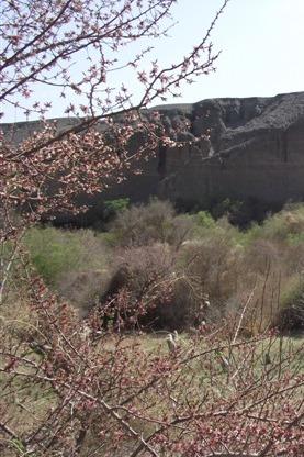 蓝色梦想4月11日周六邀您红柳河漫步杏园赏花摄影亲子游