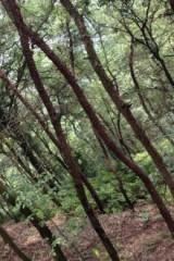 徒步孔雀谷