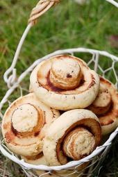 亲子活动—— 蘑菇饼干烘焙