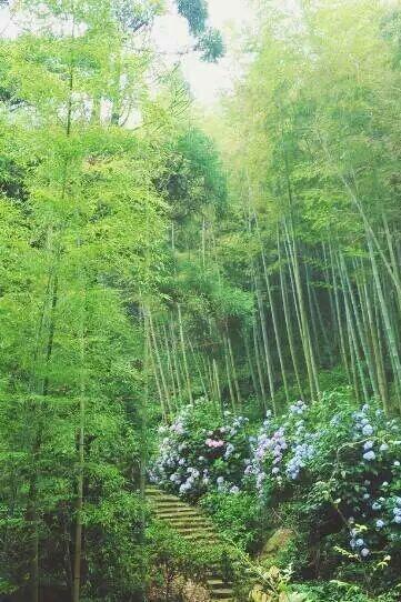 10月30日 秋天相约莫干山