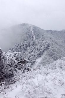 南岳看雾松