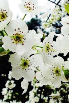 海神车会4月12号赏梨花什川会员儿童免费亲子游