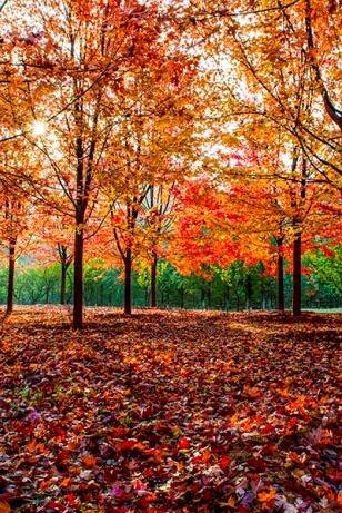 10月25日周日 横山寺徒步赏红叶