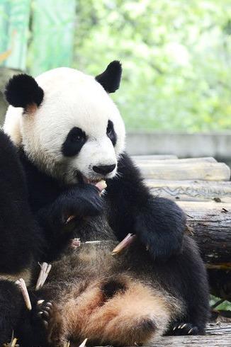 4月5.6【玩客亲子旅行】杭州动物园2岁可参加