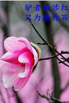 3月26号花溪景辛夷花1日游58