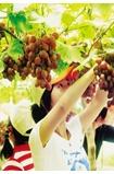 相约葡萄庄园采摘美味果实