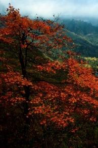 蓥华山-红叶之旅