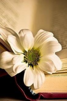阅读,寻找生活的真相