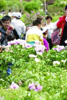 4月19日星期天菏泽牡丹园大家一起看牡丹