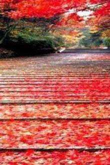 11月4号-6号北京赏红叶,登长城,游故宫