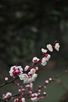 3月20日火柴棍户外之磐安赏桃花观