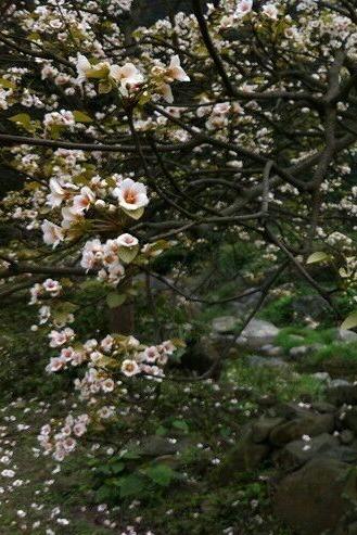 4月4号周六武鸣小陆村徒步欣赏油桐花活动