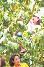 4月23日(周六)简阳樱桃沟采摘(单边约40公里)