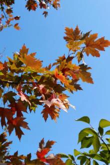 横山寺森林公园 赏枫叶