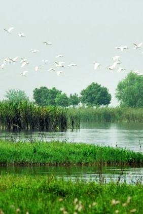 蔡甸区后官湖湿地公园一日游
