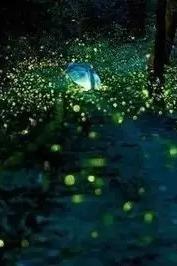 我和萤火虫有个约定,森林萤火虫帐篷节!