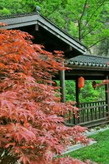 周末活动.12日(周六)南漳春秋寨红叶休闲一日游。