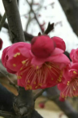 爬九里山,赏梅花