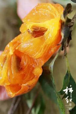 11.5周六郑湖采柿子尝柿子还有砸柿子哦!