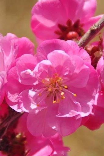 4月9日(周六)杏花村、沙滩谷一日徒步烧烤活动