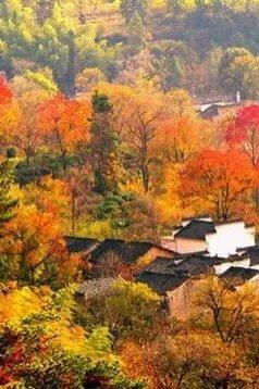 11月6—8日房车营地、塔川枫叶、温泉自驾之旅