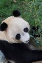 4月12号济南动物园+采摘草莓1日游