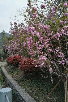 4月23日九龙湖爬山