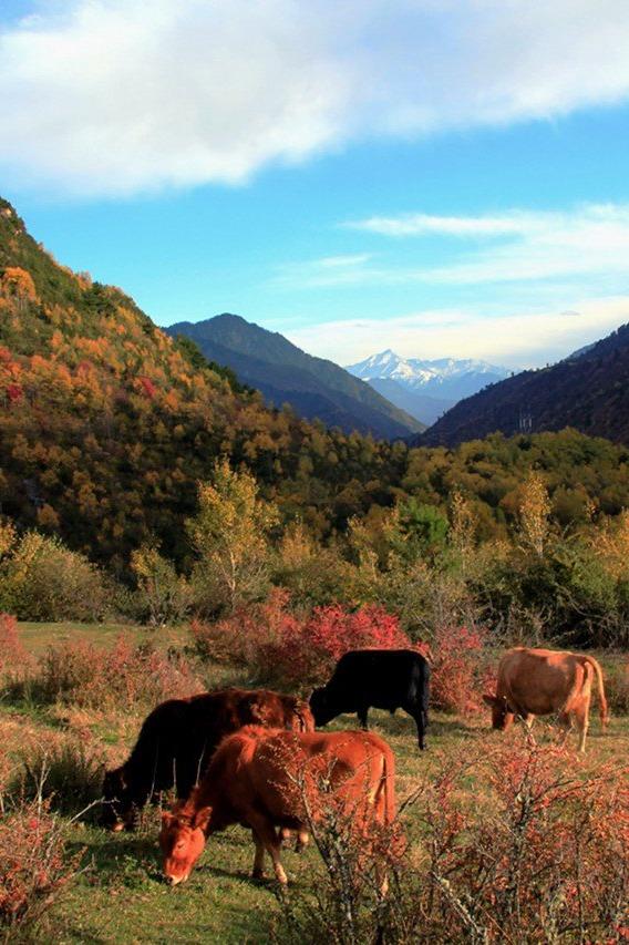 本周末孟屯河谷徒步露营看彩林,驴友入门级体验