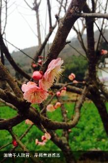 3.14赏桃花拍美图活动
