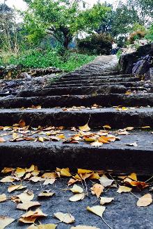 14日四明山茅镬行摄银杏林、低坪古道休闲徒步一日游