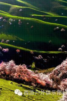 4月10号西游户外带你去吐尔根看杏花感受迷人仙境
