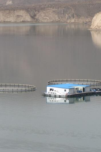 4月25日观李家峡水库-徒步黄河岸边乡间踏青