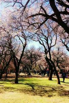 吐尔根,杏花节一日游