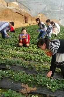 3月1日吐鲁番摘草莓爬火焰山小比赛一日亲子活动