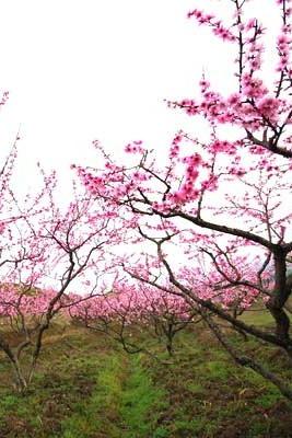 桃花山上赏桃花,野植园内赏景观石—一日徒步活动