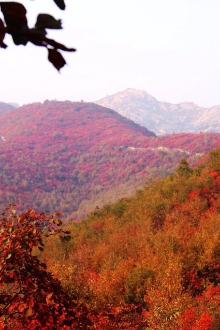 周未桐柏红叶山赏红叶