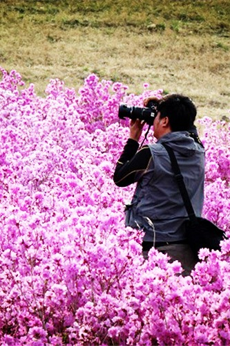 海拉尔-喇嘛山-杜鹃花节两日自助游